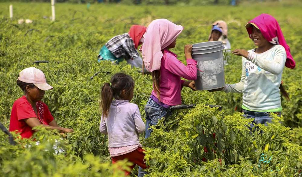 Niños jornaleros, los más afectados por falta de higiene