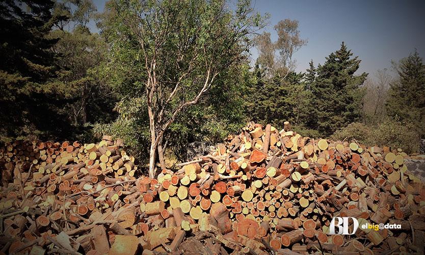 Inconsistencias en la tala de árboles del Bosque de Tlalpan