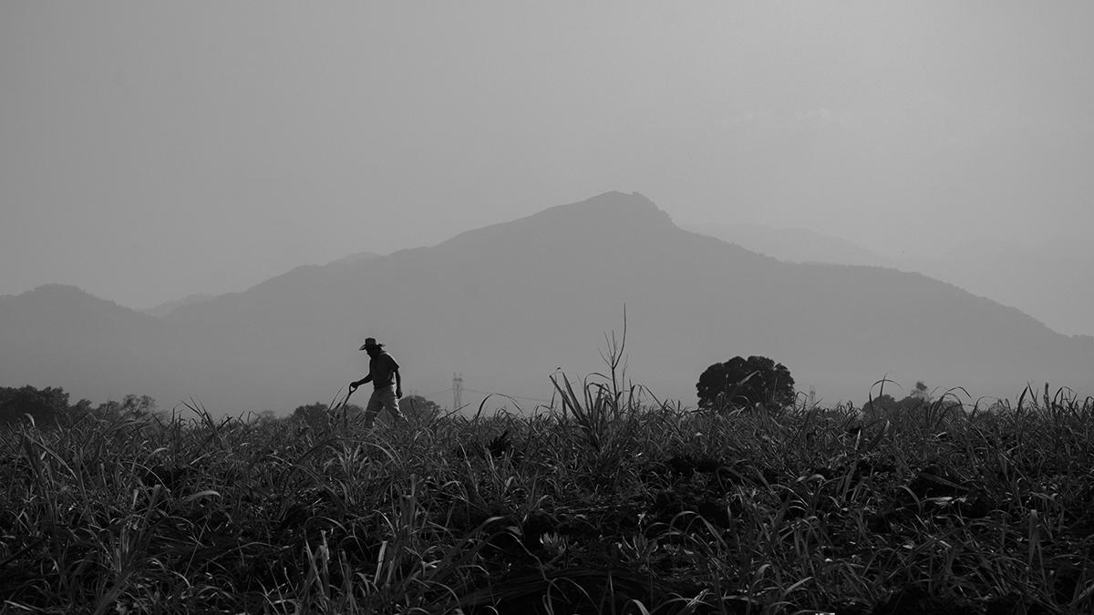 Colinas de Santa Fe: 280 cuerpos que aún no son nadie (Veracruz)