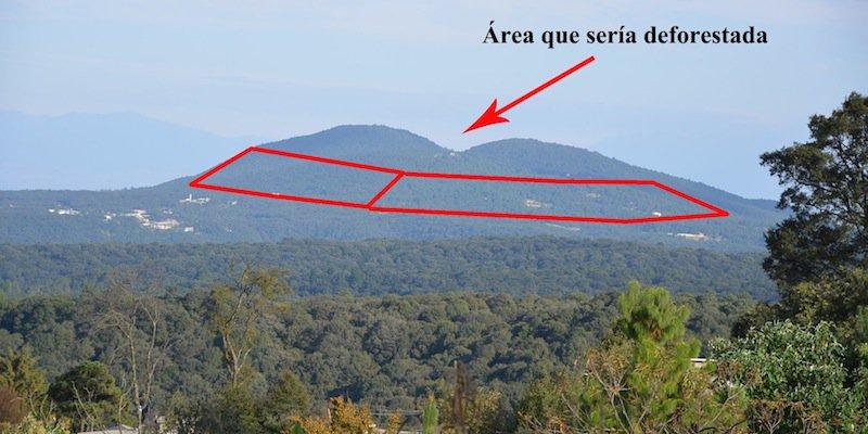 Destrucción de 200 mil árboles por zona residencial en Jilotzingo, Edomex