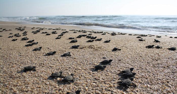 Vecinos de la playa Punta Arena, BCS, denuncian daño a santuario de tortugas por extracción de arena