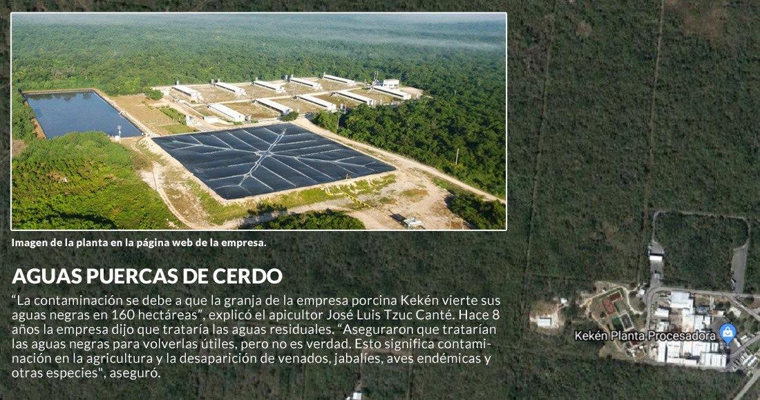 Granja de cerdos en Yucatán contamina el agua de cenotes y afecta la producción de miel