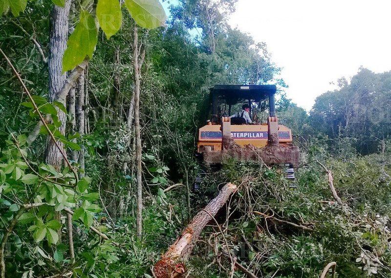 Alertan sobre nuevo ecocidio (Campeche)