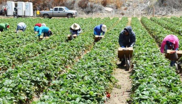 Sólo 7.5% de jornaleros agrícolas cuentan con seguridad social