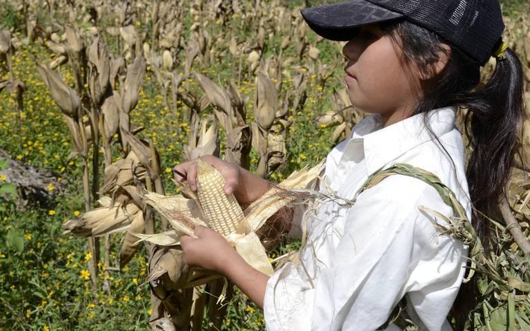 Niños jornaleros, las víctimas silenciosas (Michoacán)