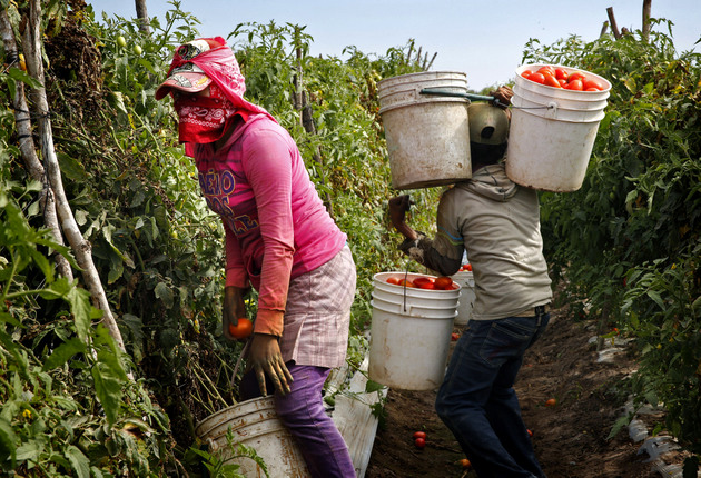 Los jornaleros, las mayores víctimas del trabajo esclavo en México