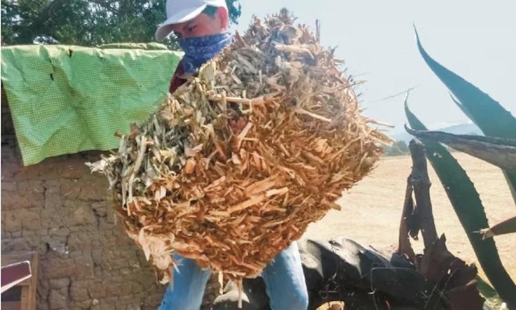 Detectan aumento de trabajo infantil en Hidalgo