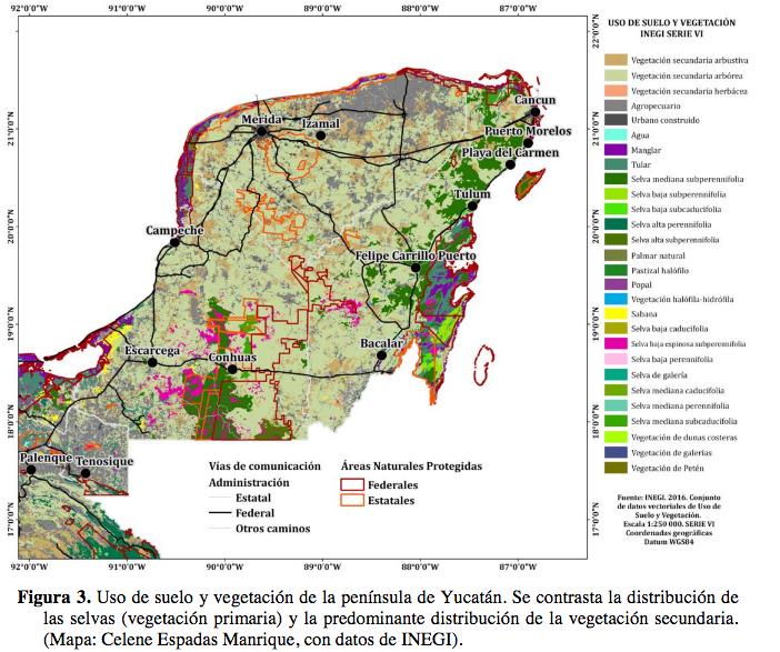 El tren maya ¿Por qué están tan preocupados los biólogos?