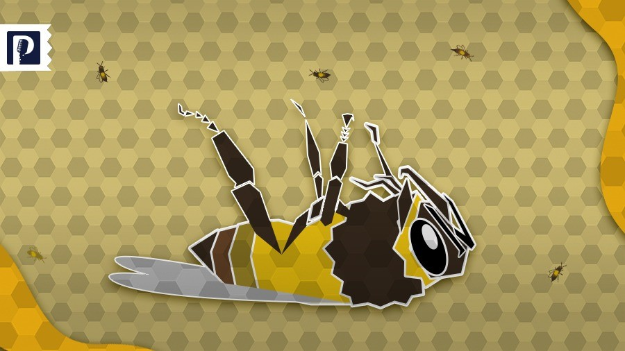 Mueren en promedio mil millones de abejas cada año en Sonora por insecticidas y el clima