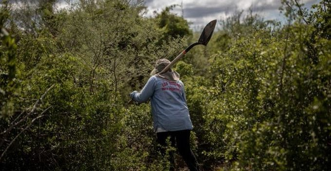 Matan a la activista Zenaida Pulido en carretera de Michoacán