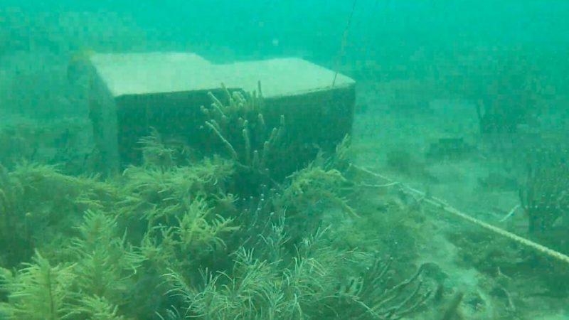 Barrera 'antisargazo' daña arrecife en Puerto Morelos (Quintana Roo)