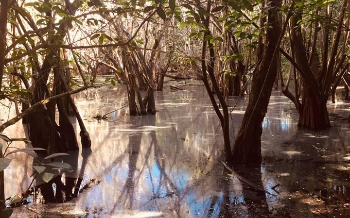 Toneladas de sustancias químicas contaminan el acuífero de la península de Yucatán