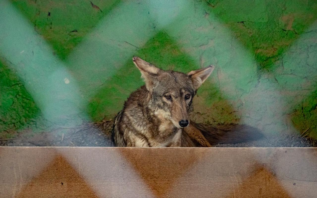 Guerrero, la mega biodiversidad está abandonada