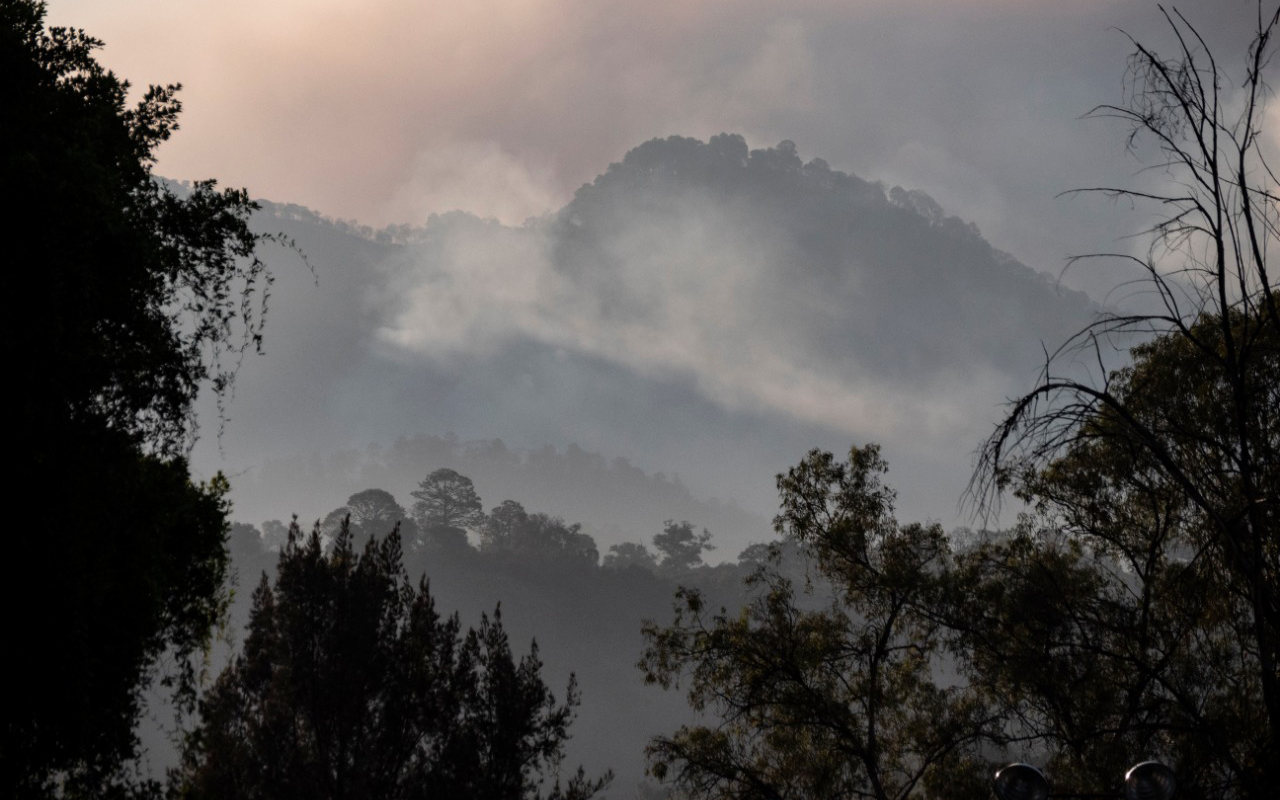 """Aguacate michoacano: el """"oro verde"""", manchado de rojo y de ceniza"""