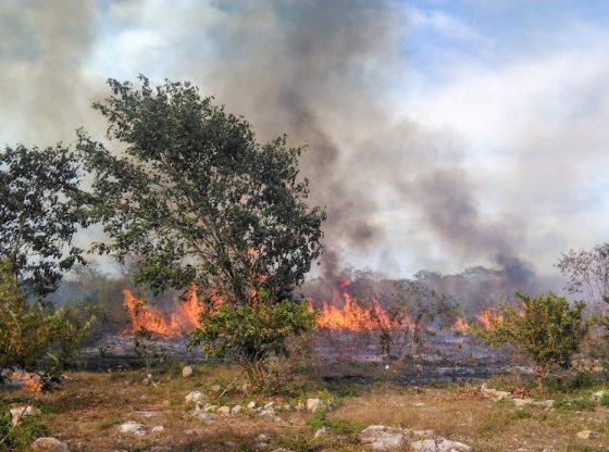 Urge atender incendios en selvas mayas; abejas se quedan sin hogar