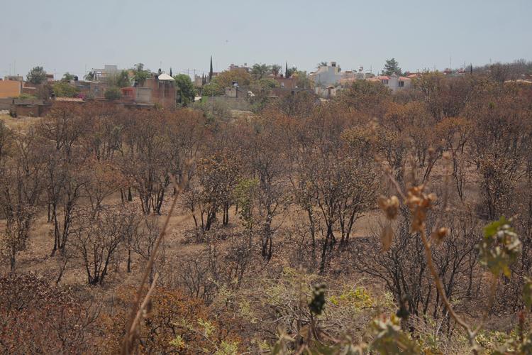 Denuncian tala ilegal en el bosque Nixticuil (Jalisco)