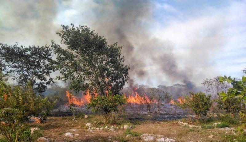 Incendios que siembran la deforestación en la Península de Yucatán