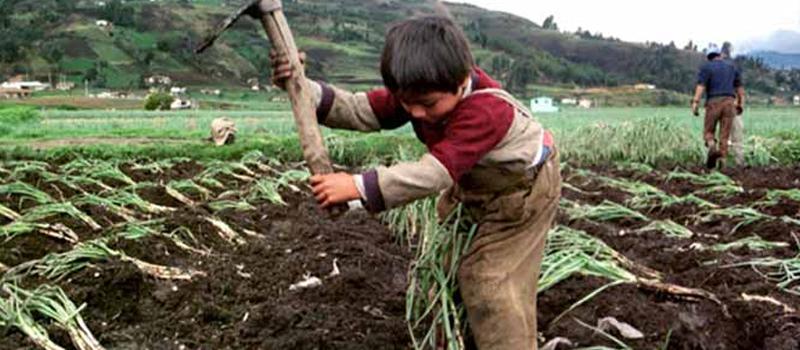 20 mil niños trabajan en Colima; 56% en actividades peligrosas