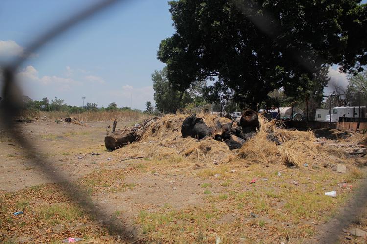 Colectivo denuncia tala; ayuntamiento lo niega (Jalisco)