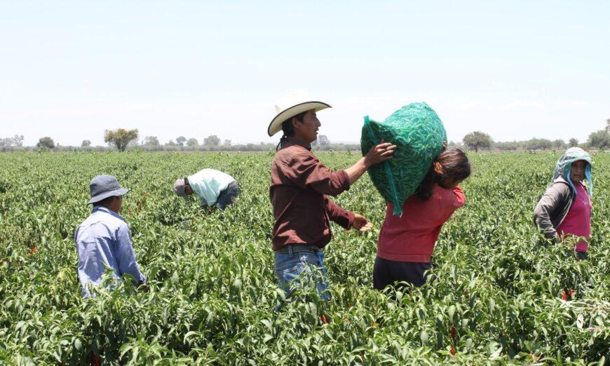 Jornaleros agrícolas, solos contra covid, crisis, marginación…