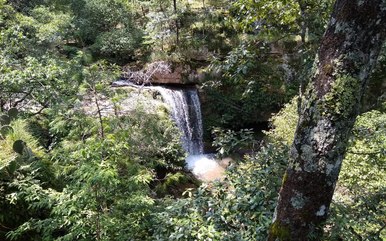 Bosques en Durango, en riesgo por covid y presupuestos