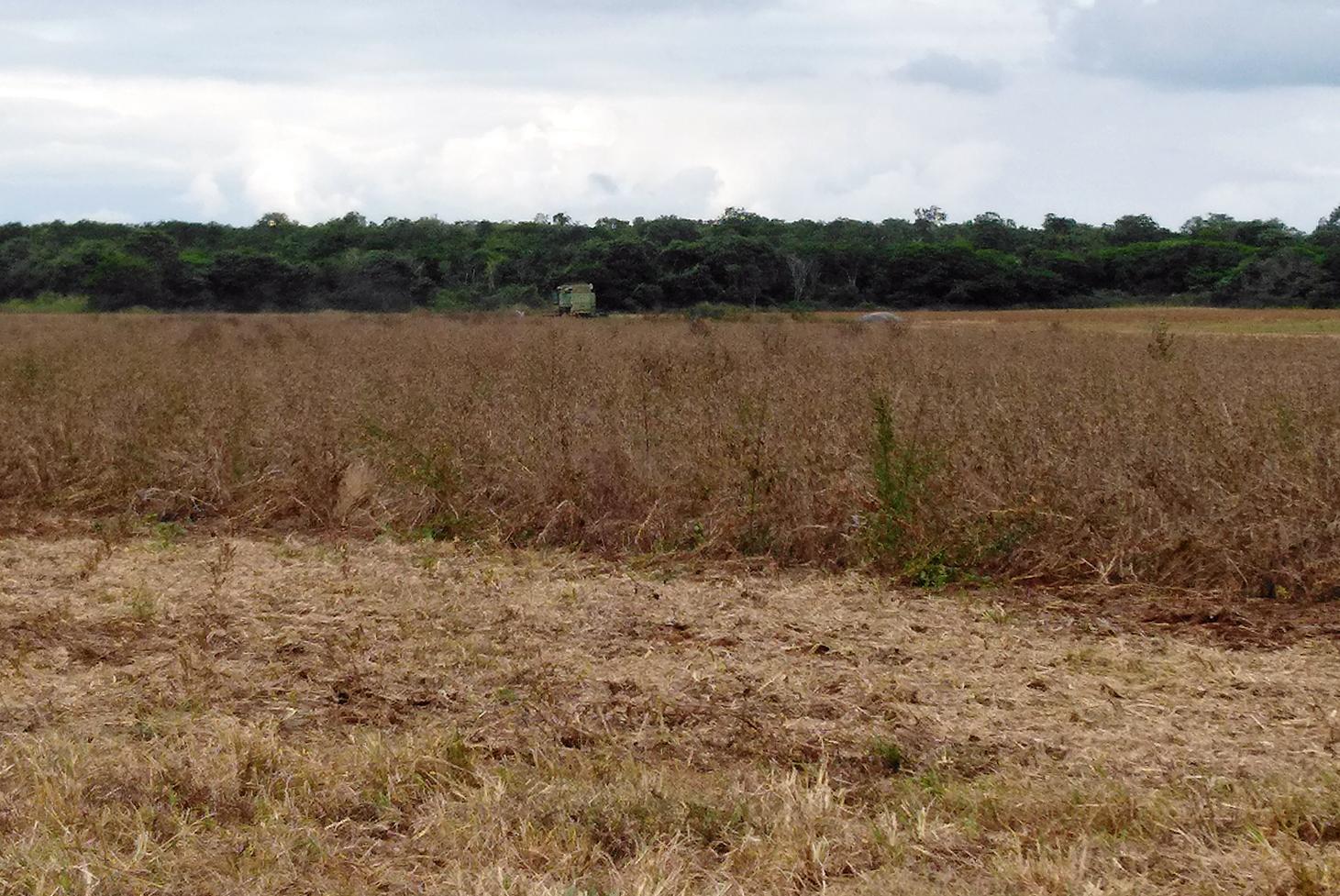 """Los rostros (no tan) ocultos del mal llamado """"tren maya"""". Parte 1 : El tren de la 4T y el fomento de la agroindustria"""