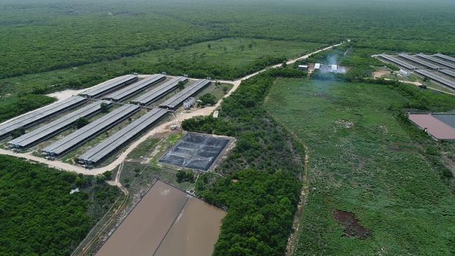 Porcicultura Industrial Pace a sus Anchas en México
