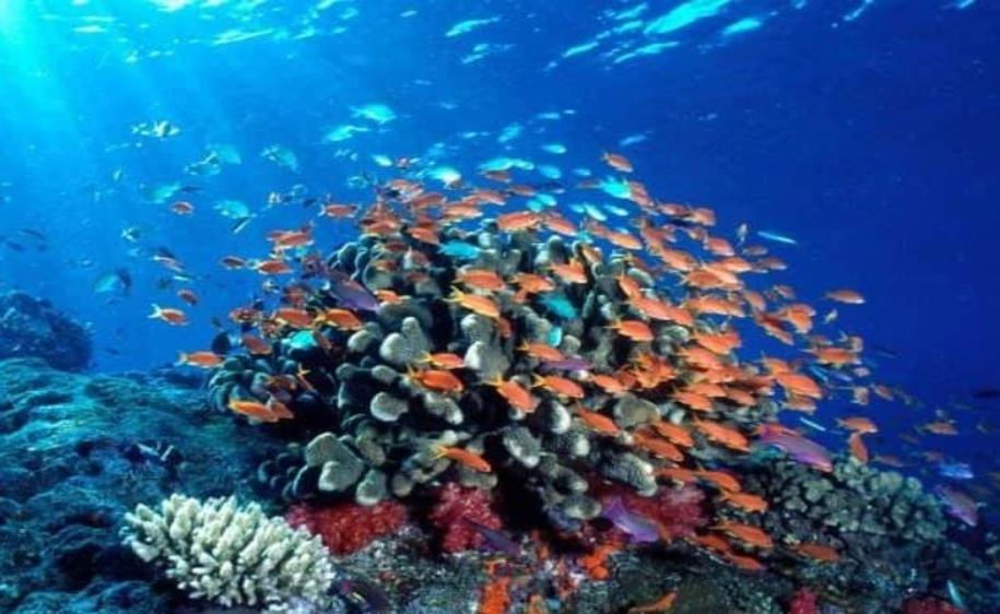 Contaminación a acuífero de Veracruz impactaría al mar alerta investigador