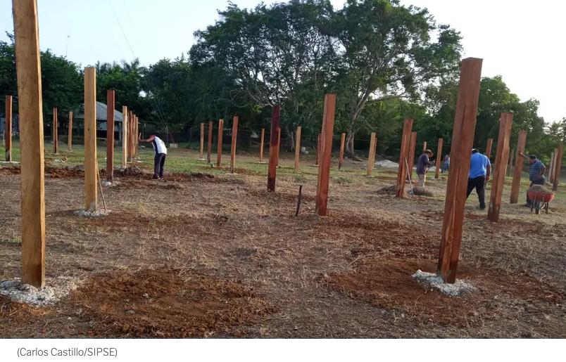 Chetumal: Sembrando Vida devasta miles de árboles en Quintana Roo