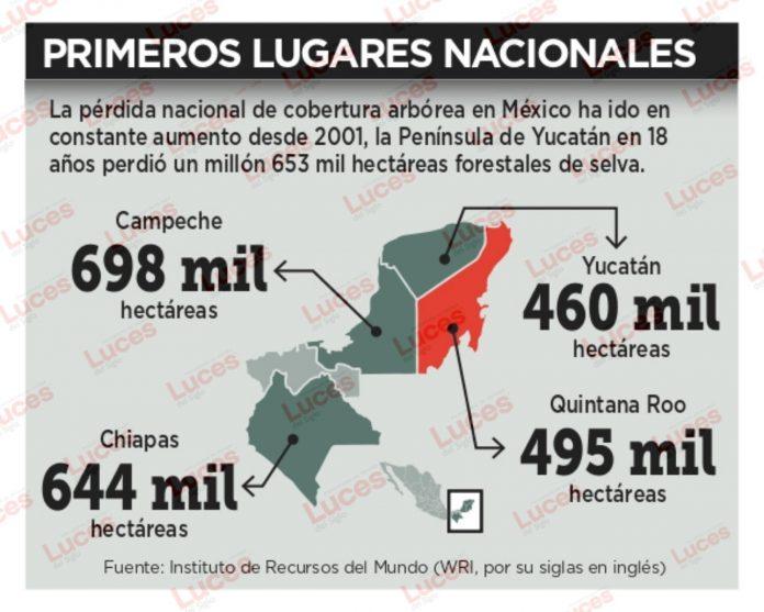Deforestan en Península 1.6 millones de hectáreas