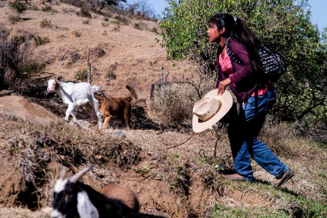 Urgente: Atacan nuevamente con armas de fuego a comuneros de Cuatro Venados, Oaxaca