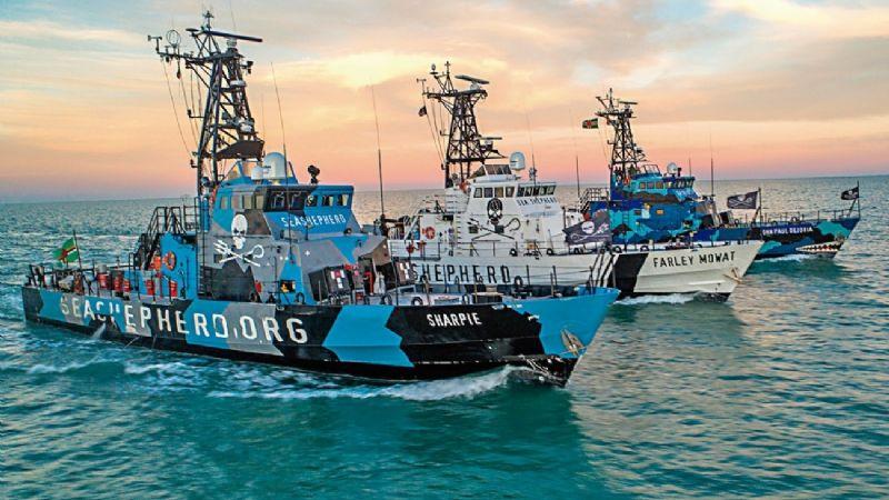Sea Shepherd: un poder internacional (Baja California)