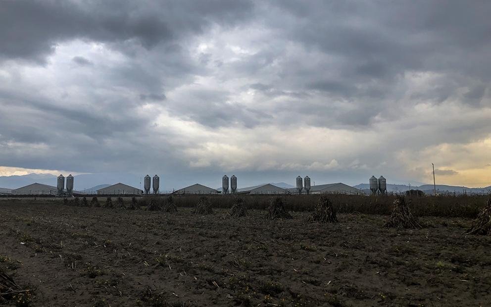 La guerra de San Antonio de las Cuchillas contra una granja de cerdos (Puebla)