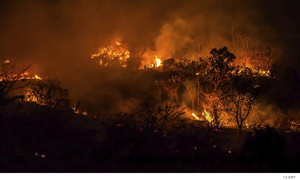 El Consejo Regional Wixárika exige a la Federación y al estado apoyo a las comunidades afectadas por incendio forestal (San Luis Potosí)
