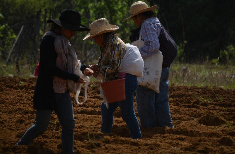 Mujeres de San Pablo Cuatro Venados resisten y defienden sus tierras ancestrales (Oaxaca)