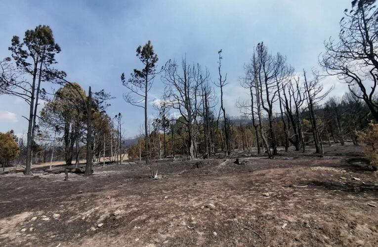 Fuego, saqueo e indiferencia consumen a la Sierra Tarahumara
