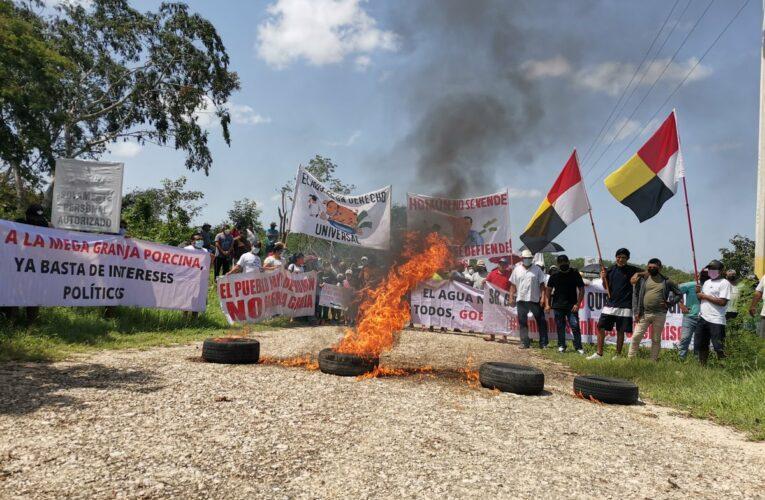 Homún se atrinchera y acusa de falsos los estudios para granja de cerdos (Yucatán)