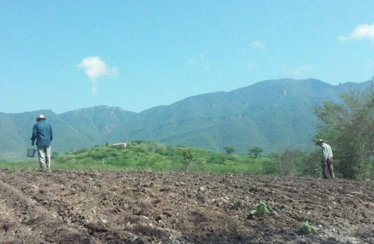 El Mentidero: un valle envenenado con glifosato (Jalisco)
