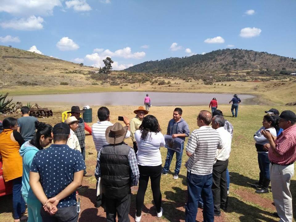 Habitantes de Tepetlaoxtoc buscan salvar Ajolotes de mineras del NAICM