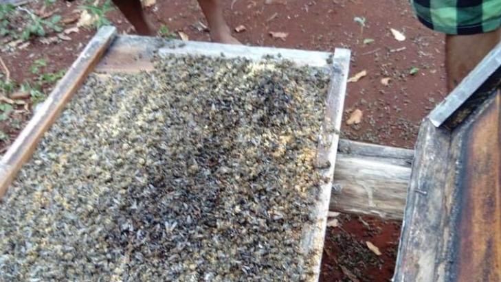 Fumigación de empresario provoca pérdidas millonarias a apicultores de Quintana Roo