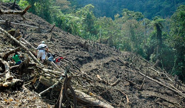 AGUACATE Y BERRIES CULPABLES DE DEFORESTACIÓN EN 80 MIL HECTÁREAS DE MICHOACÁN