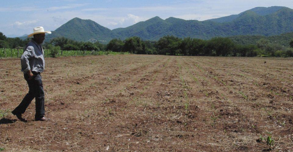 Avionetas devastaron cultivos al fumigar en comunidades pobres en Guerrero, acusa ONG