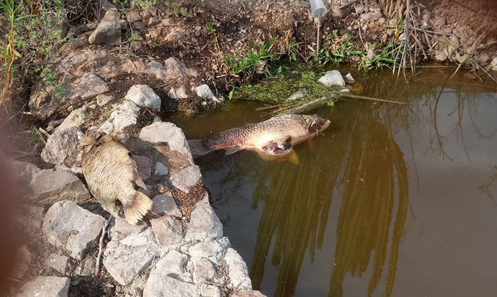 Ecocidio en la Huasteca…Contaminación del río Moctezuma (San Luis Potosí)