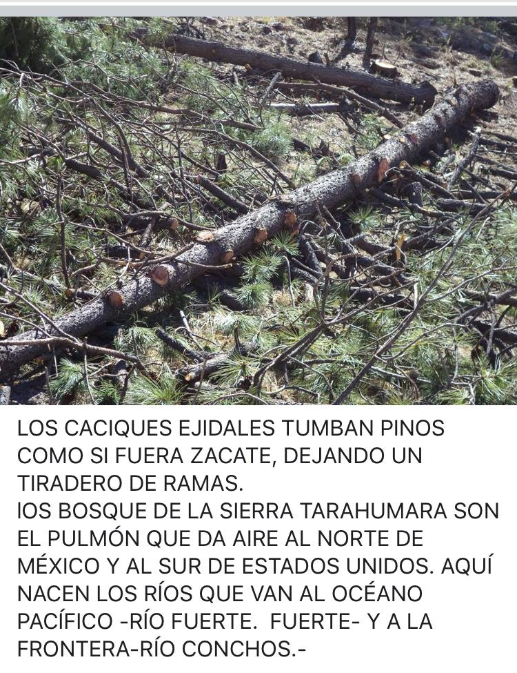 Denuncian ecocidio en la sierra tarahumara (Chihuahua)