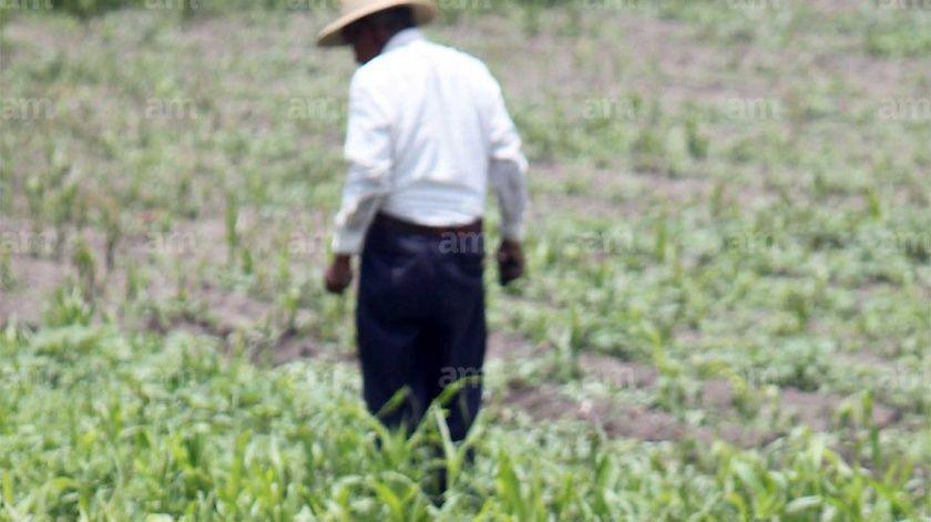Quedan sin apoyo jornaleros agrícolas que llegan a Guanajuato