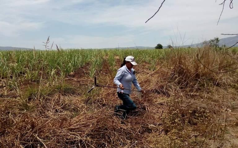 Exhuman 36 cuerpos de fosas clandestinas en Nayarit