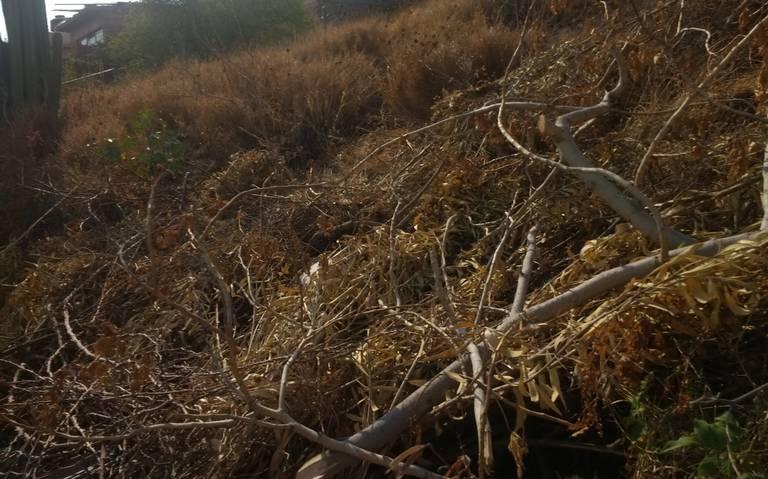Denuncian habitantes de la 8 de diciembre que incendios son provocados (Querétaro)