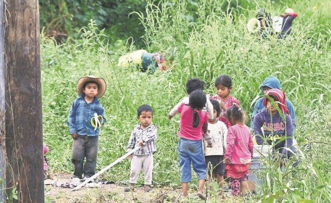 Niños jornaleros: 20 pesos diarios y apenas van a clases (Michoacán)