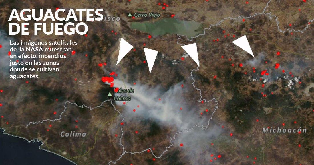 La ambición por los aguacates está detrás de los incendios en Colima-Jalisco, dicen comuneros