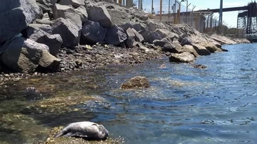 Derrame de ácido en Guaymas provocará muerte de fauna y flora en Mar de Cortés: Investigador (Sonora)